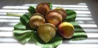 Serifos figs home residency hospitality