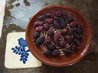 spring brings black berries