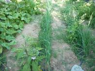 the small vegetable garden