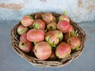 Serifos pomegranates September houses