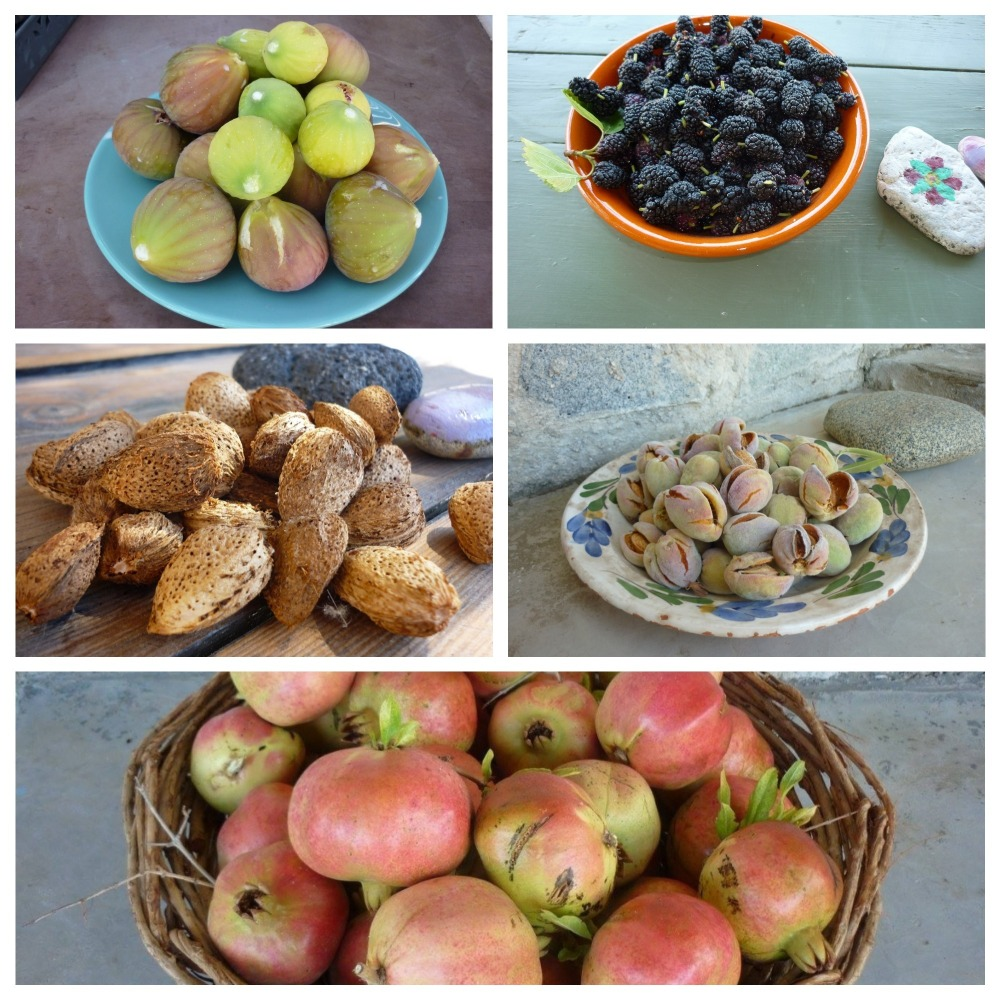 Serifos-green-friendly-family-produce-home-vacations