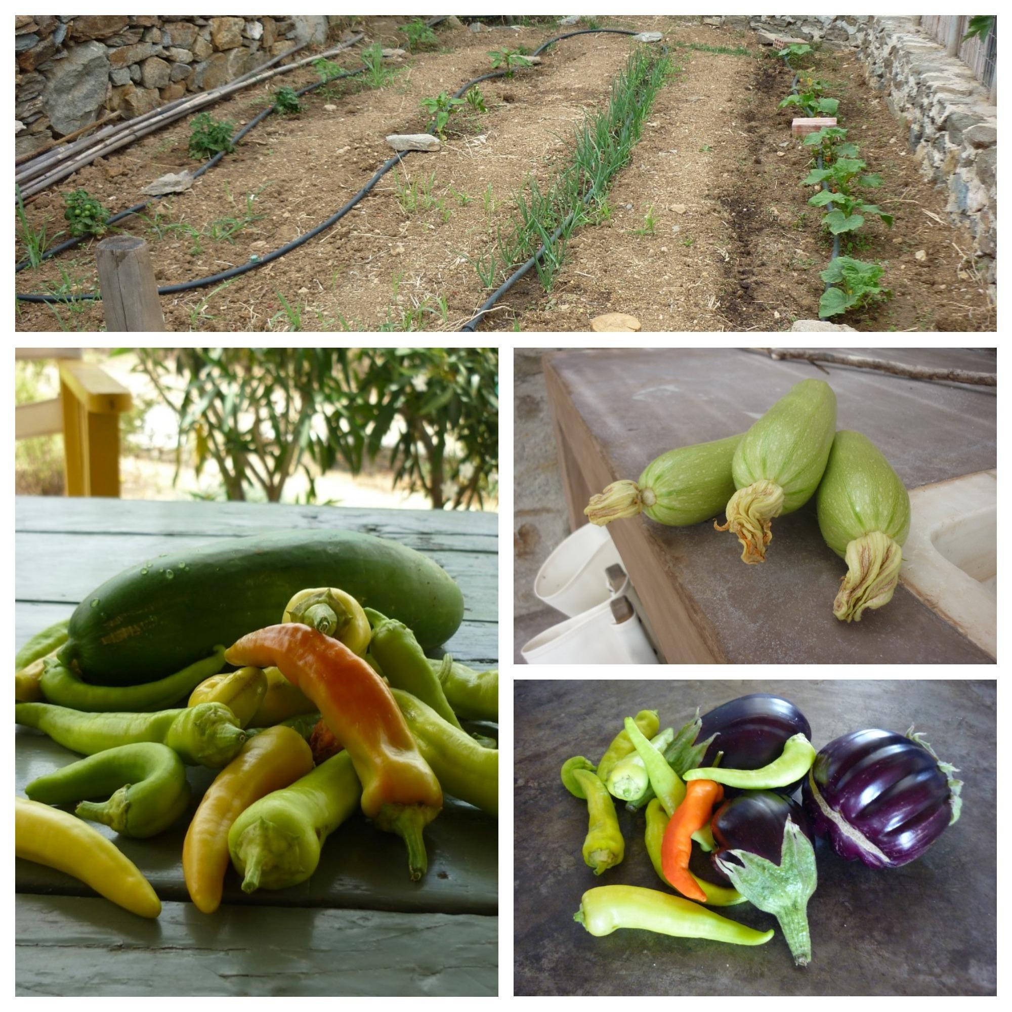 Serifos-green-sustainable-hospitality-luscious-garden