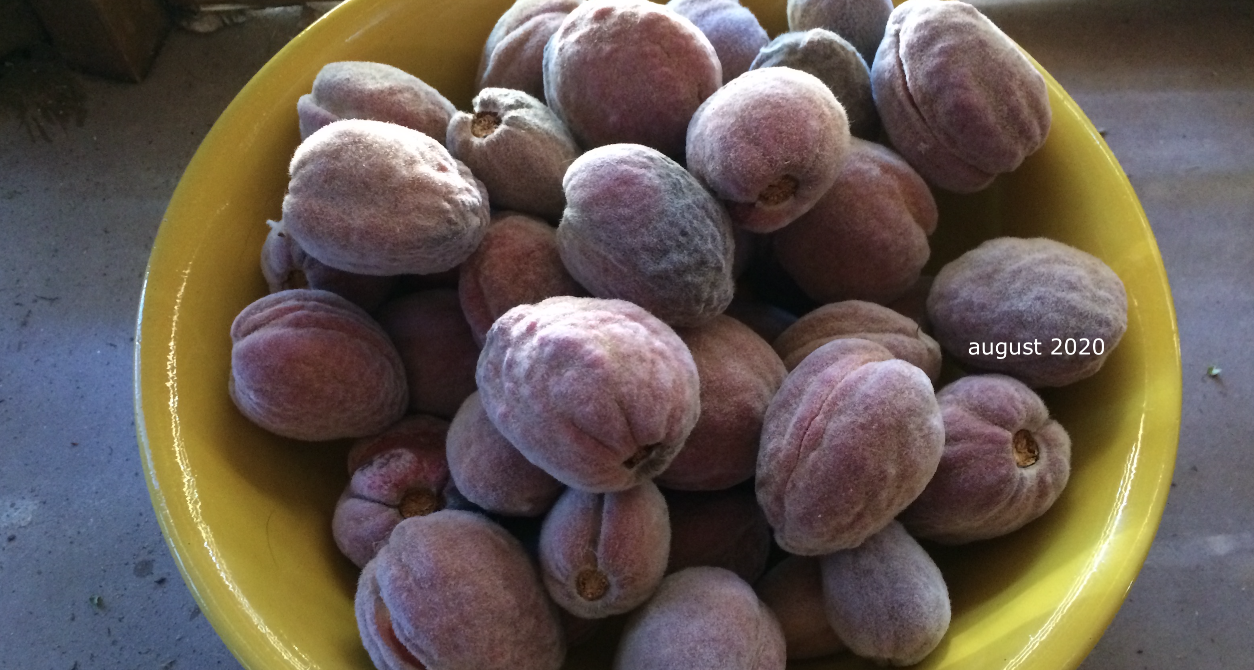 nature lovers, almonds our 2020 produce